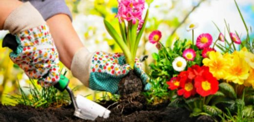 Plants- Add a WOW Touch to Your Home and Garden