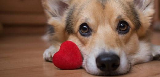 Why Online Pet Medicine Are Cheaper?