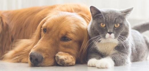 Learn Why Your Pet Need Special Care?