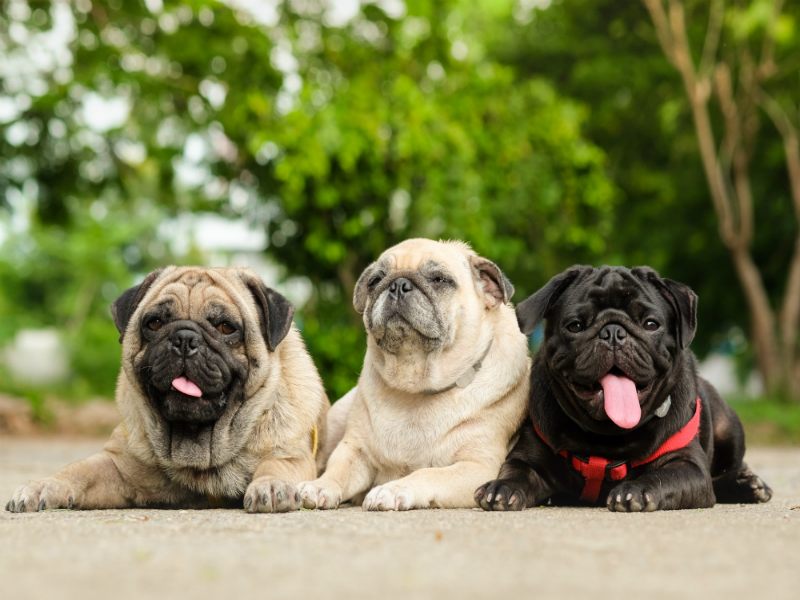 Essential Tips for Selling a Home with Pets