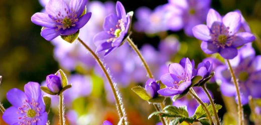 Flowers In Nature: And Their Uses In Our Life